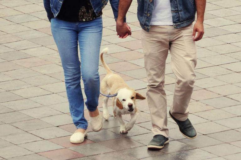 идея для свидания поиграть с щенками