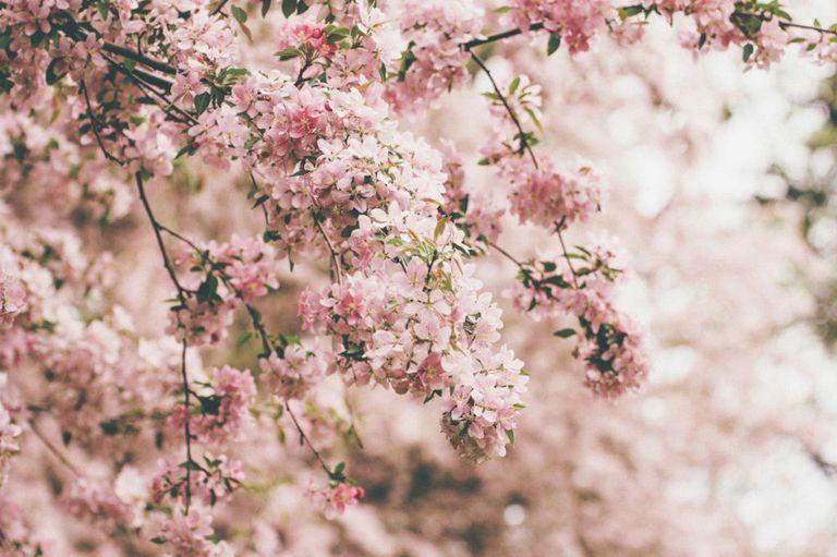 идея для свидания ботанический сад
